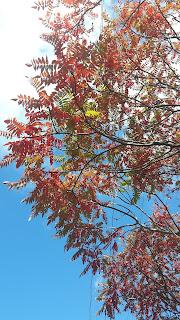 Arbre, feuilles colorées, ciel bleu, automne