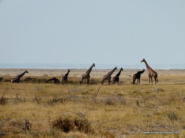 momento safari en namibia