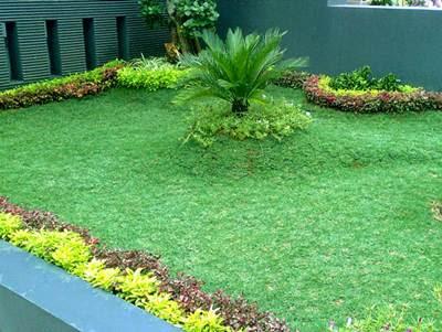 Jasa Tukang Taman Surabaya Rumput gajah mini