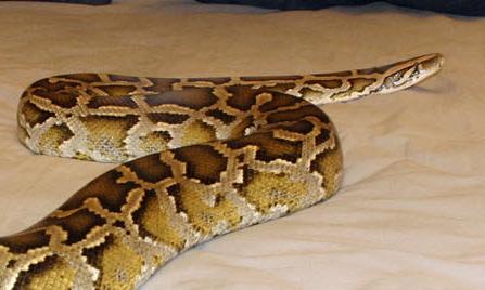 nairobi university student snake
