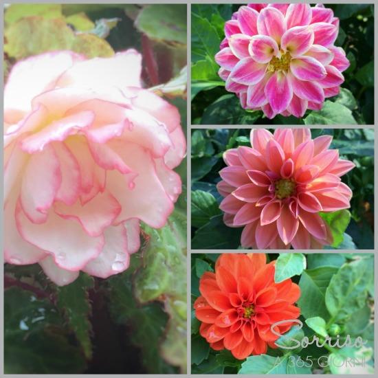 sorrisoa365giorni-giardino-dalie-begonia