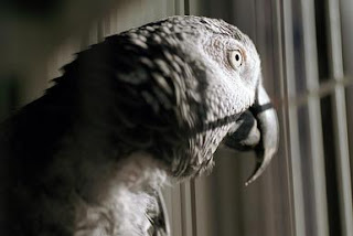 Burung yang terpenjara