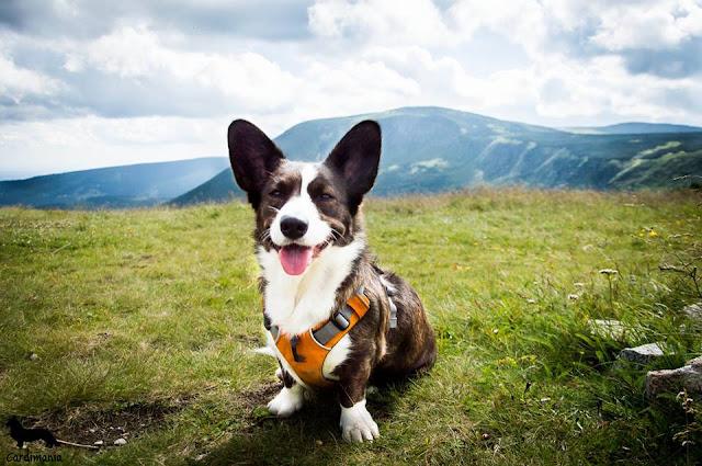 z widokiem na góry, widok na góry, góry, góry z psem, zakaza wprowadzania psów do Karkonoskiego Parku Narodowego