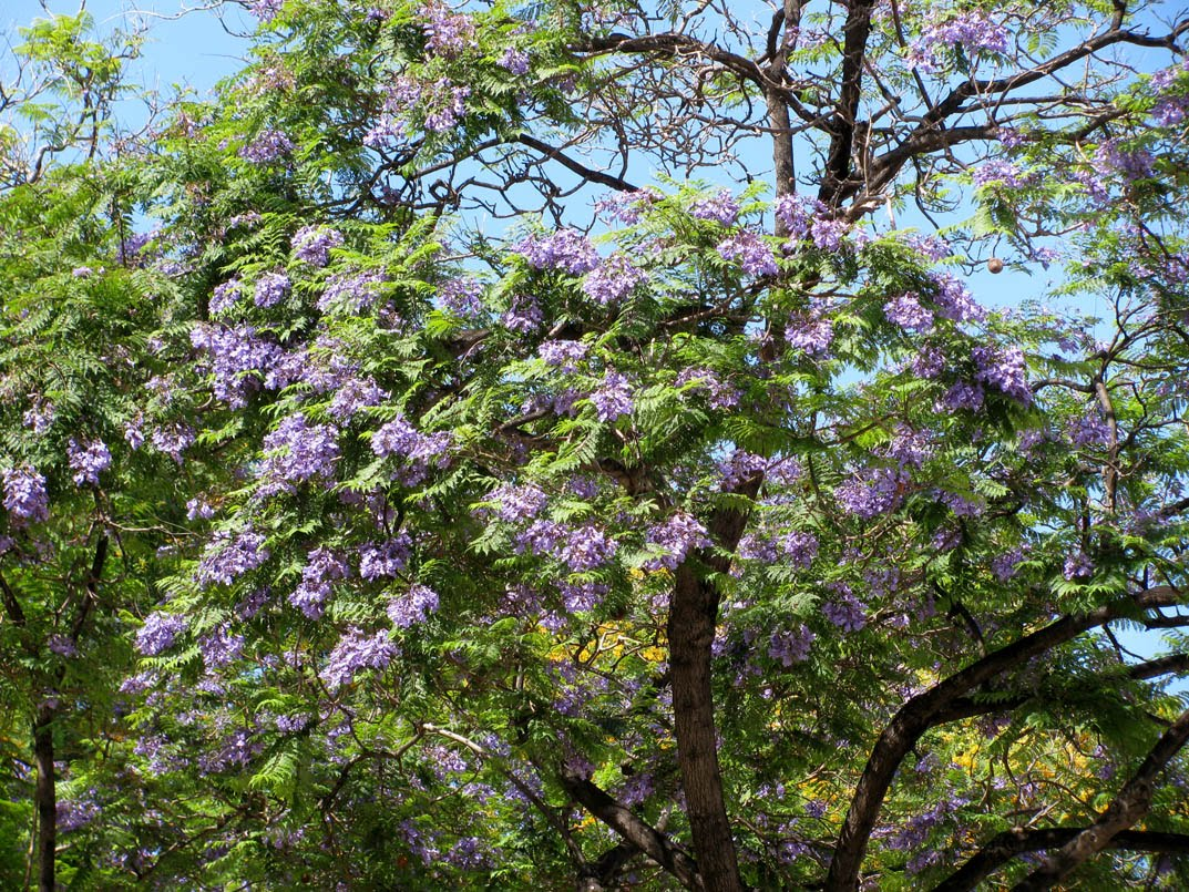 pink flowers in the tree