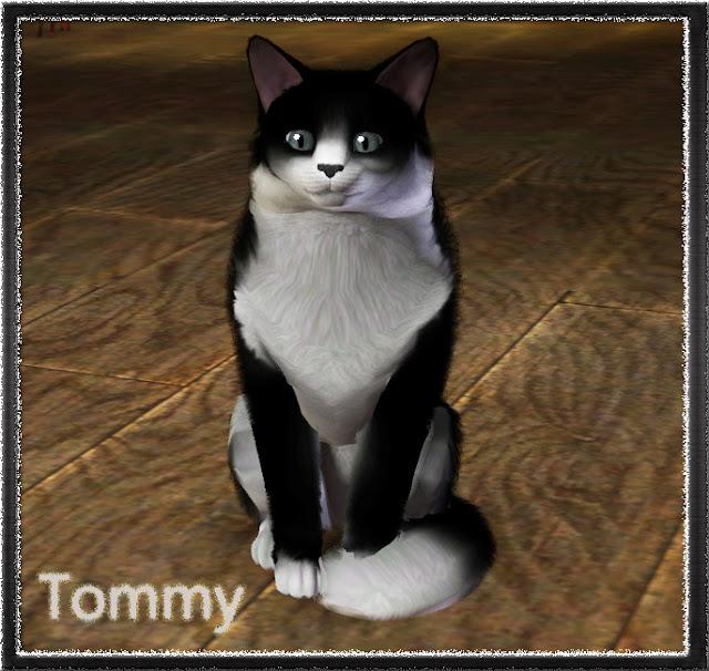 Tommy.jpg