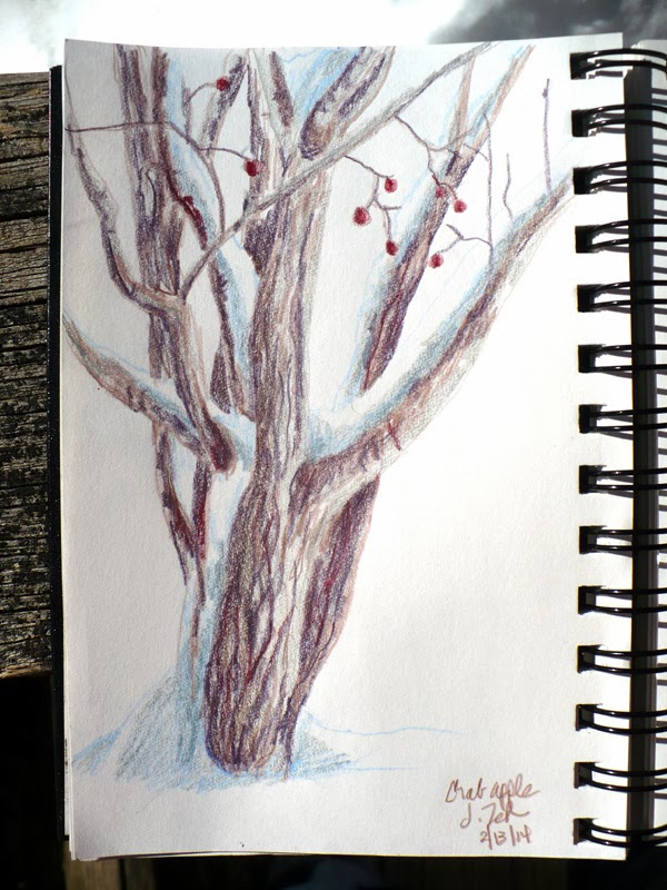 Crabapple tree in snow colored pencil sketch