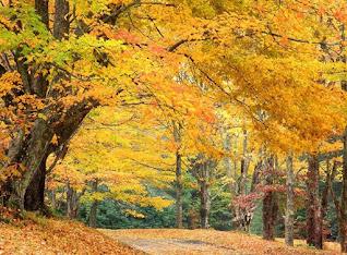احلى صور فصل الخريف