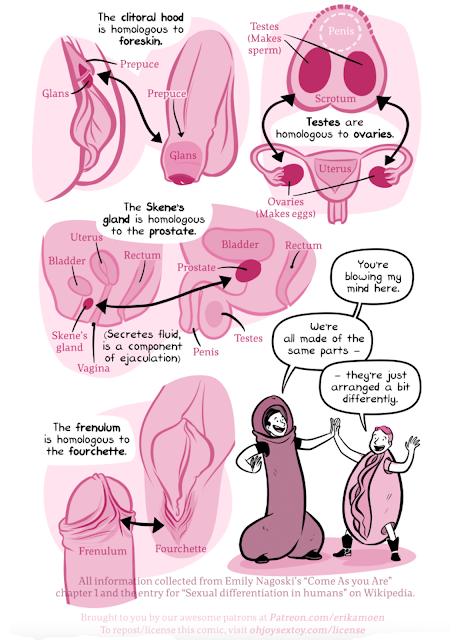 Homologous Sex Organs 37