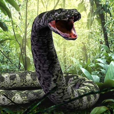 Az óriási Titánoboa minden kígyók királya