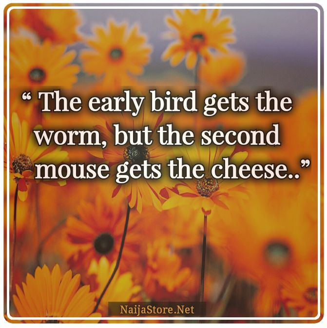 Quotes: The early bird gets the worm, but the second mouse gets the cheese..