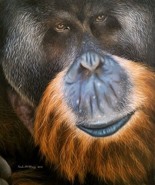 09-Orangutan-Sarah-Stribbling-A-Wildlife-and-Pet-Portrait-Artist-www-designstack-co