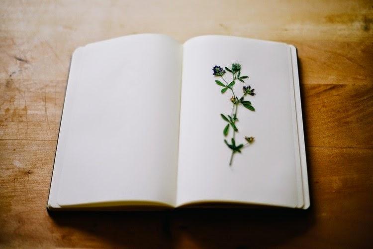 Khoảng lặng để đọc một cuốn sách