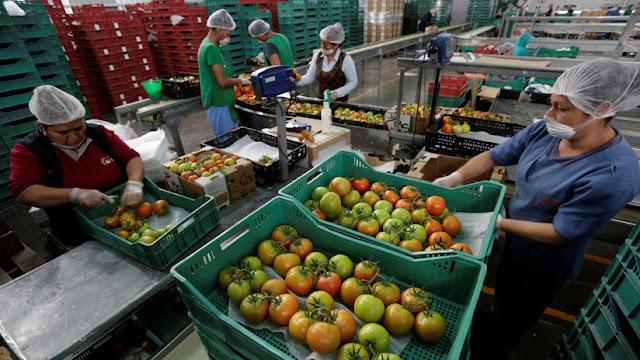 EE.UU. impone un arancel del 17,5% al tomate mexicano