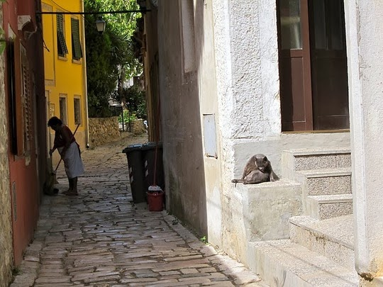 cats of rovinj croatia