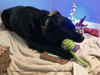 piłeczka, piłka sznurkowa, gryzak, psie zabawki, pies na kocu