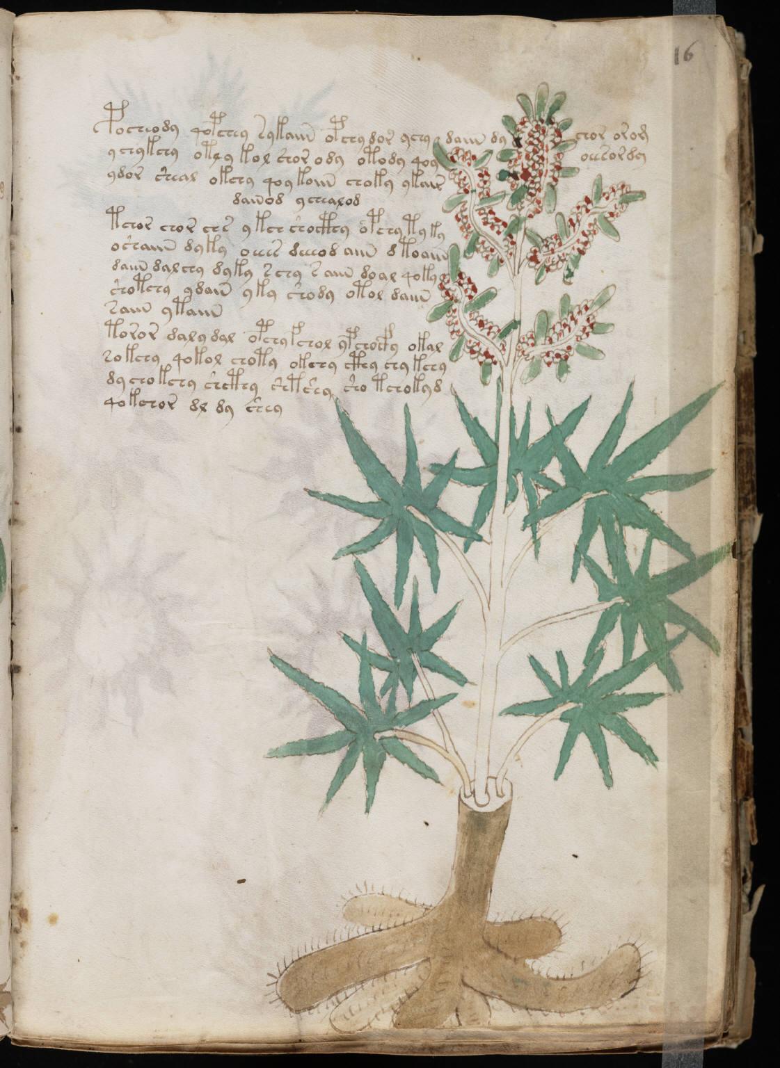 manuscrito031