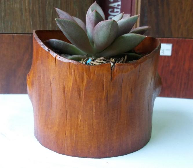 Jual Kaktus Murah  43d2d30c0c