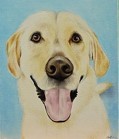 Pet portrait of Golden Labrador in oil on canvas
