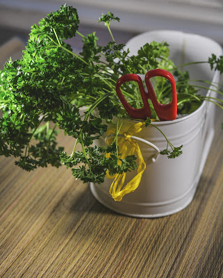 easy to grow parsley