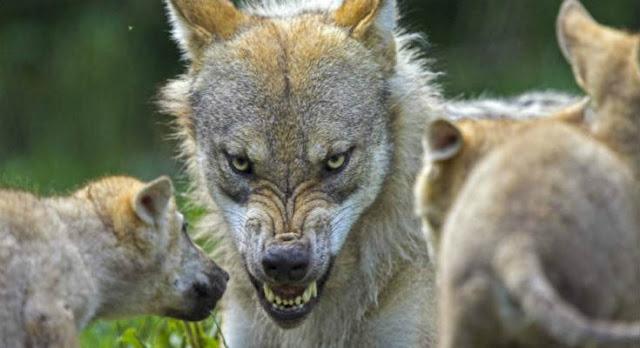 Τι πρέπει να κάνετε εάν σας επιτεθεί σκύλος - Προσοχή μην τον χτυπήσετε!