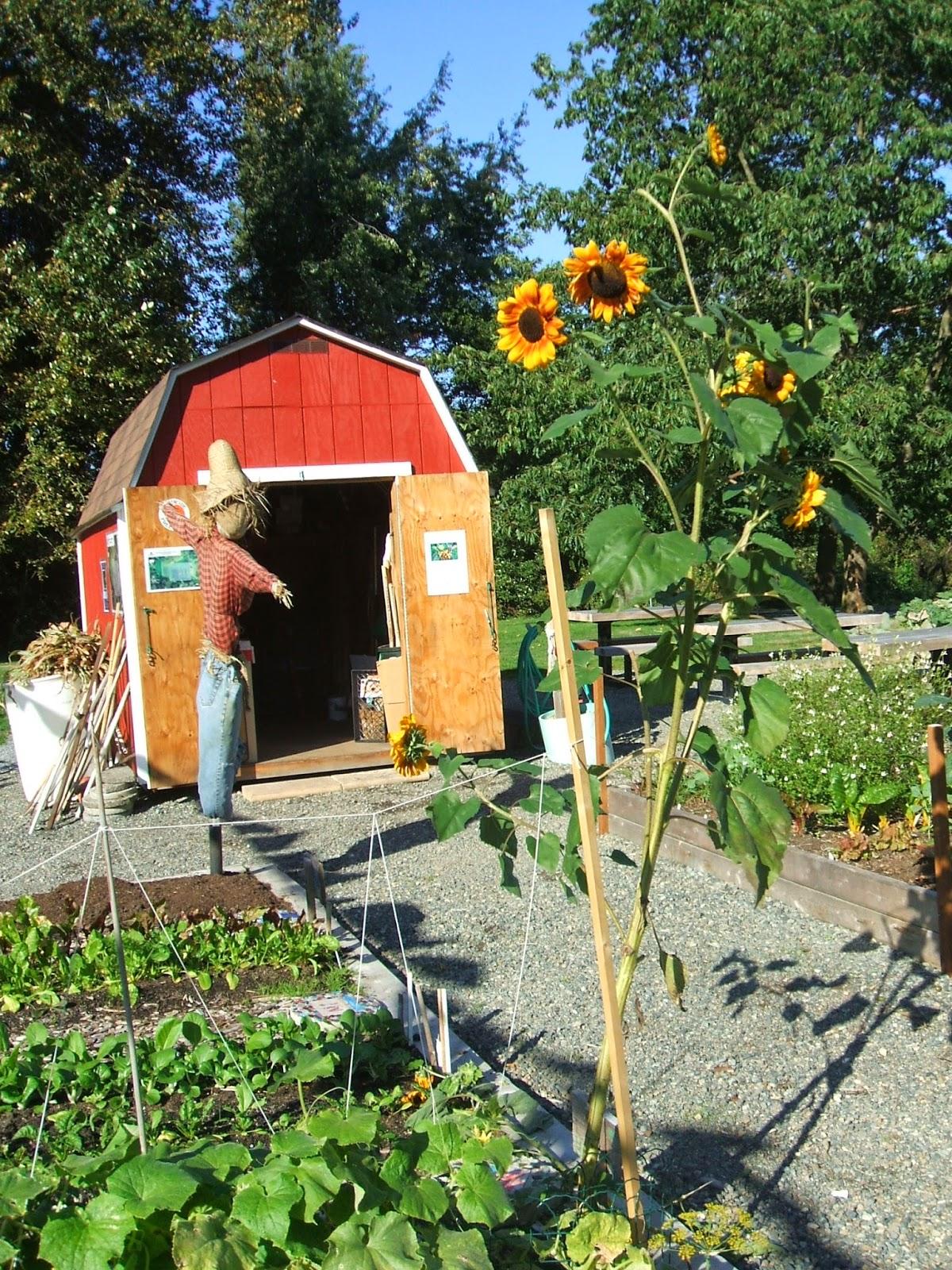 Shoreline area news july 2014 for Garden shed 4 u