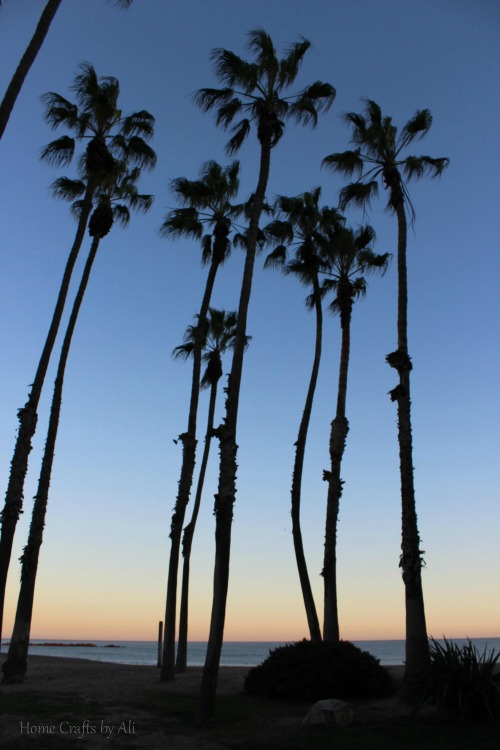 Cabrillo beach palm trees at sunset