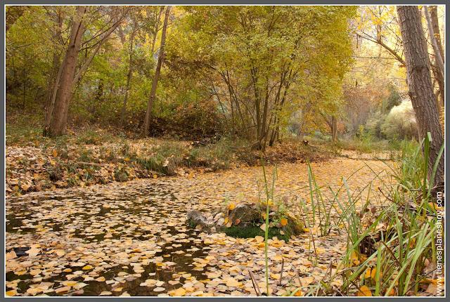 Parque Natural Barranco del Rio Dulce Guadalajara