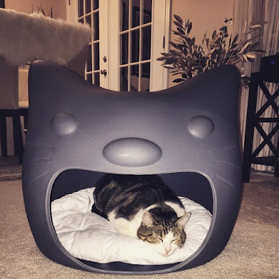Cat Face Cat Bed