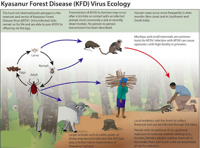 Kyasanur Forest Disease Virus Ecology