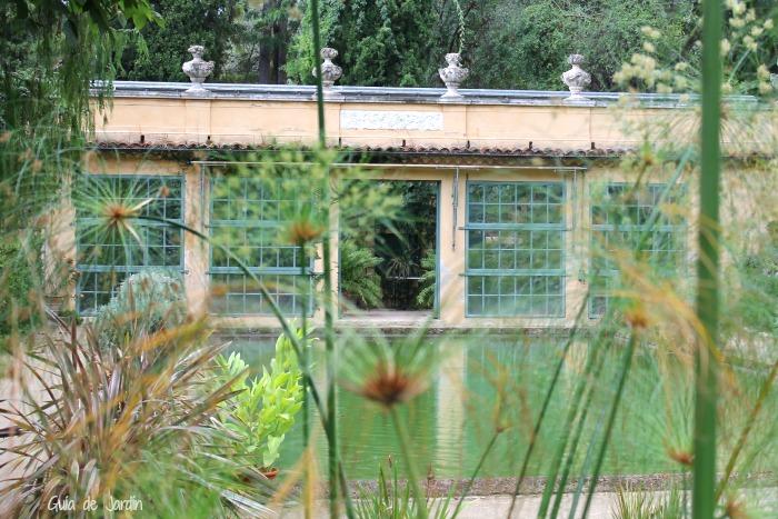 Papiros en el jardín acuático frente al invernadero