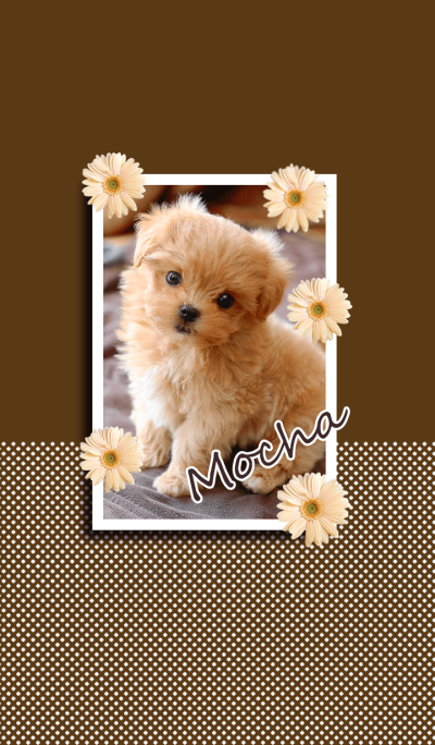 I love Moche