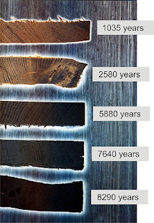 Bog wood colour based on age. Image: Abudimir85 Creative Commons