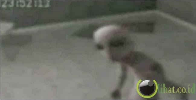 Alien datang ke bumi