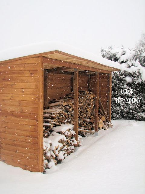 drewutnia oprószona śniegiem