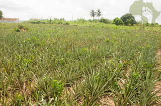 Ghana Launches US$113m Agric Project