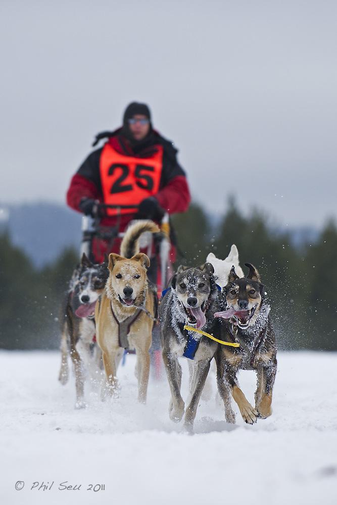 Phil Seu Photography Blog West Yellowstone Sled Dog