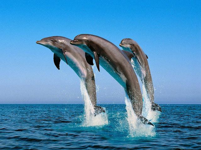 delfiny geje