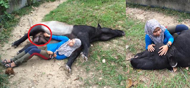Pegang 4nu Tapir, Wanita Ini Dikecam Netizen Mulut Puaka