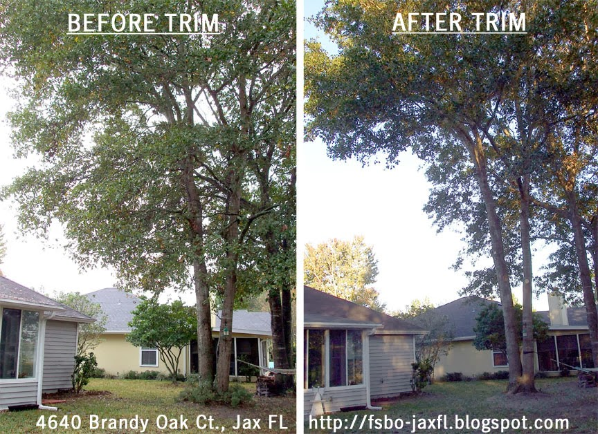4640 Brandy Oak Court - Water Oak Trees Trimmed