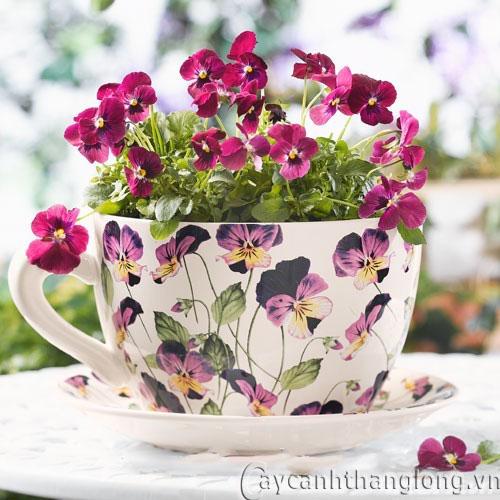 Cách chọn và cắm sao cho hoa tươi lâu tàn