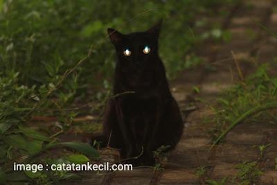 Mengapa Mata Kucing Dapat Menyala Saat Malam Hari??