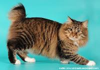 10 Jenis Penyakit Kulit Pada Kucing, Pencegahan & Pengobatan