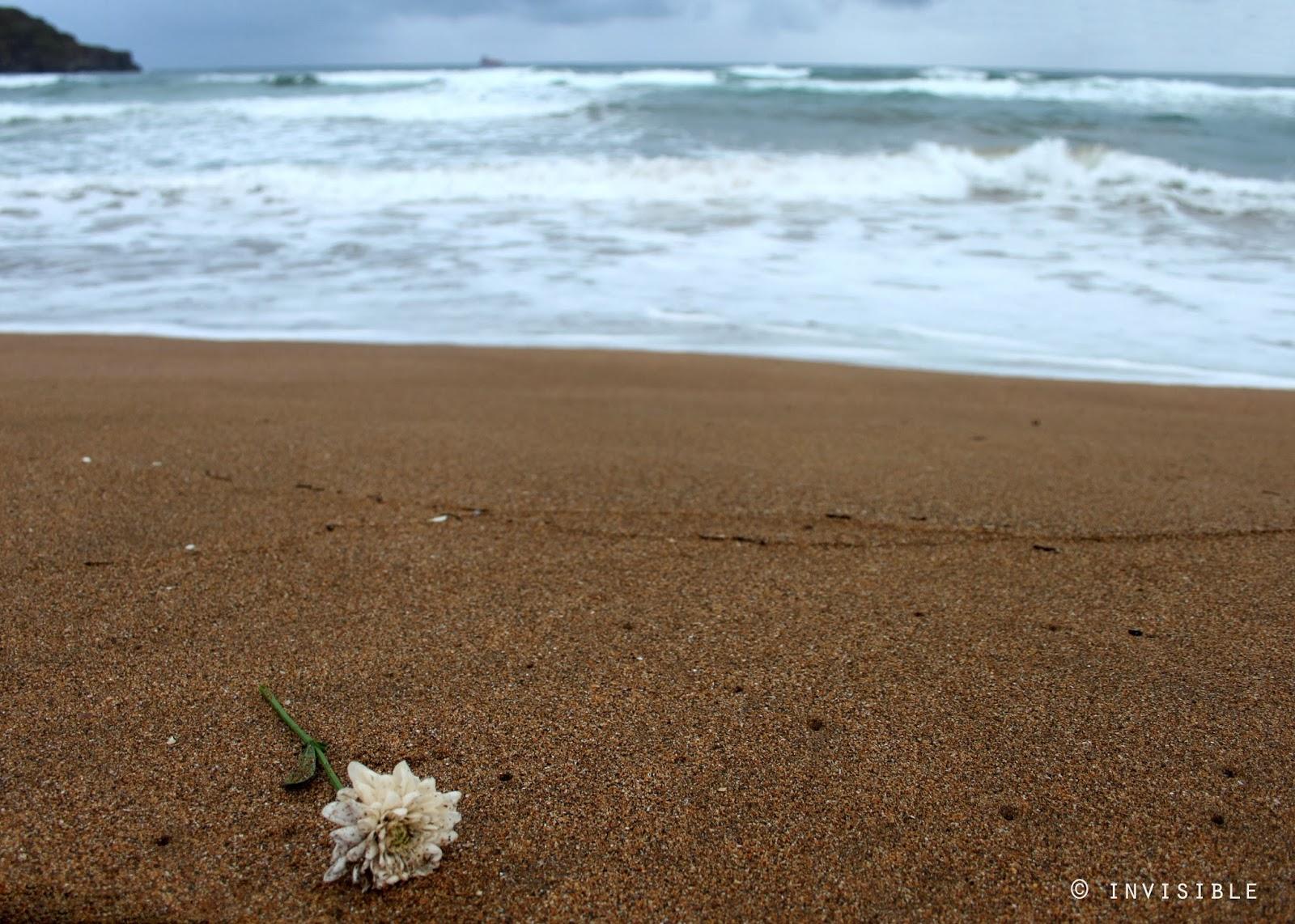 Te Quiero Arena De Playa A Orillas Del Mar Fotos De: Invisible SLG Photos: Flor En La Orilla Del Mar