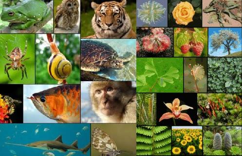 faktor Yang Mempengaruhi Pertumbuhan Makhluk Hidup Faktor-faktor Yang Mempengaruhi Pertumbuhan Makhluk Hidup