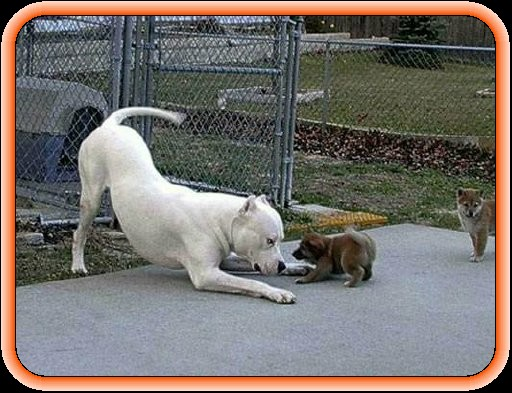 of Pit Bulls and morons....: The Nanny Dog issue - redux