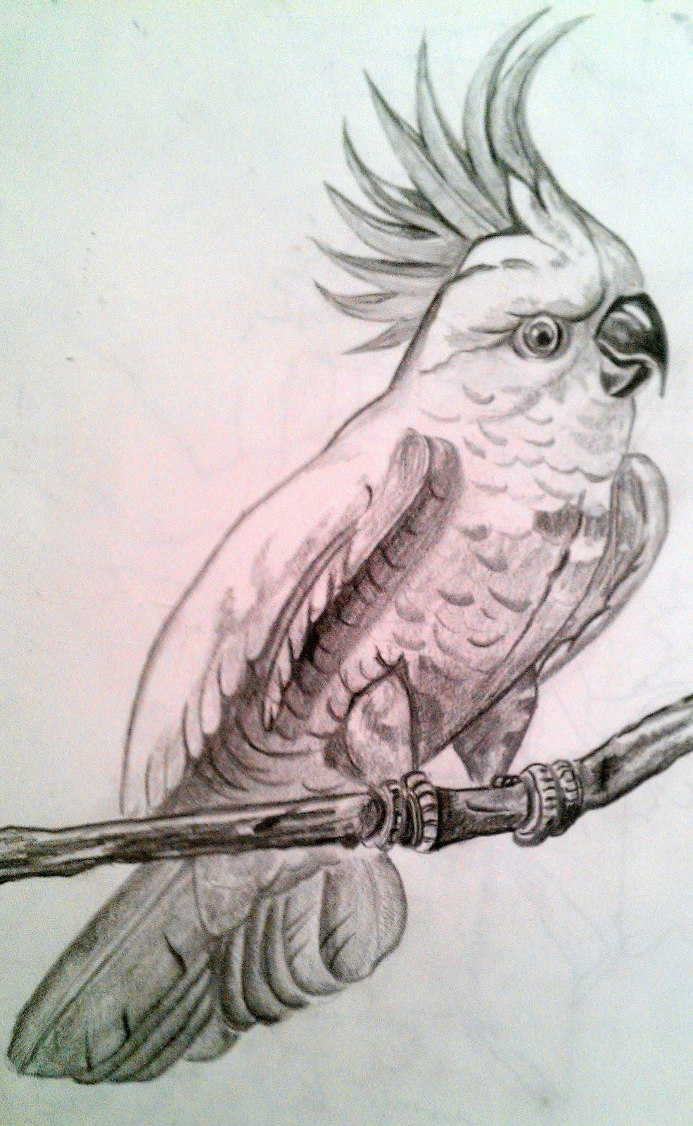 reshmi's art: my latest bird potraits in pencil