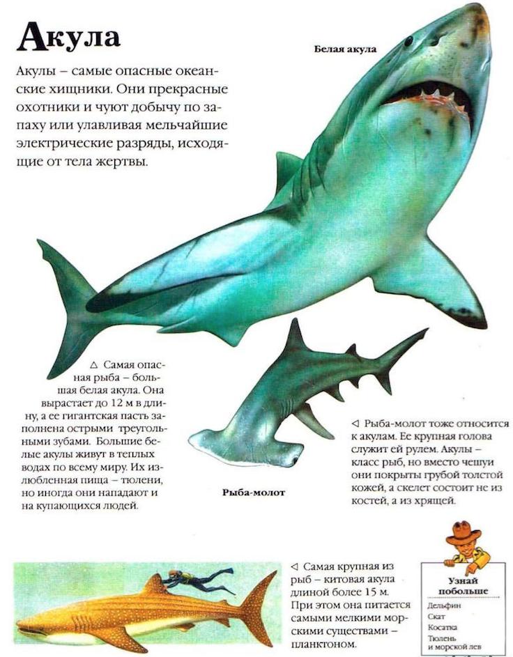 прикол про картинка акулы и описание параде