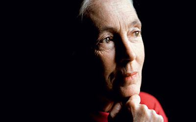 Jane Goodall: «Never give up!»