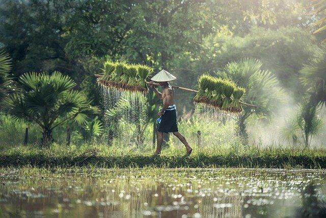 Fakta Indonesia produsen beras