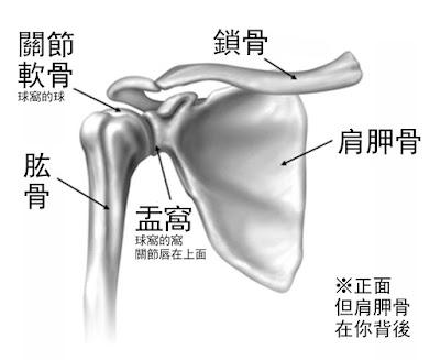 肩膀 骨頭 關節